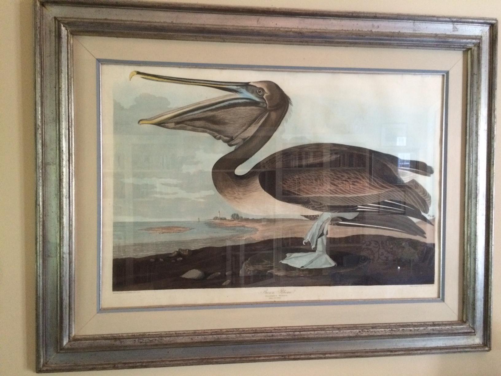 audubon havell 1836 brown pelican double elephant.jpg