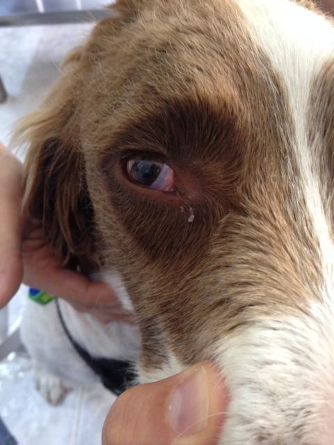 Eye pic 1